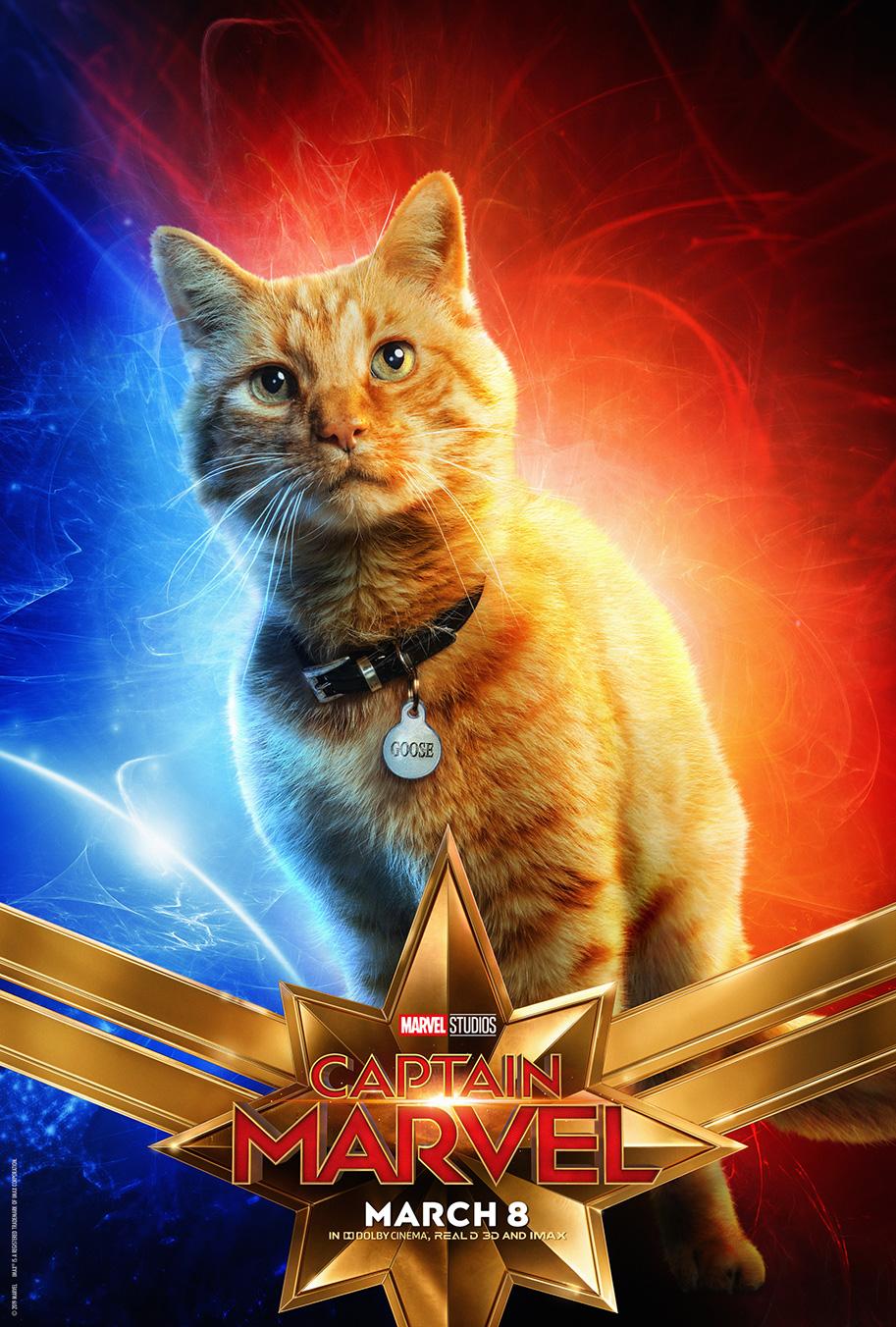 goose the cat, carol's adorable feline friend